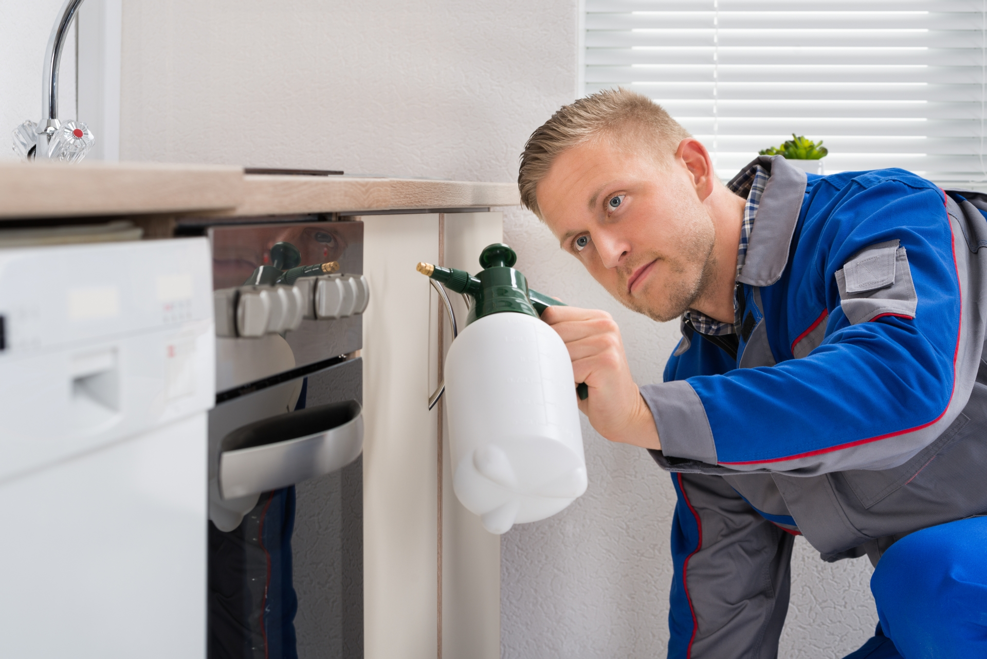 Pest Inspection, Pest Control in Chiswick, W4. Call Now 020 8166 9746