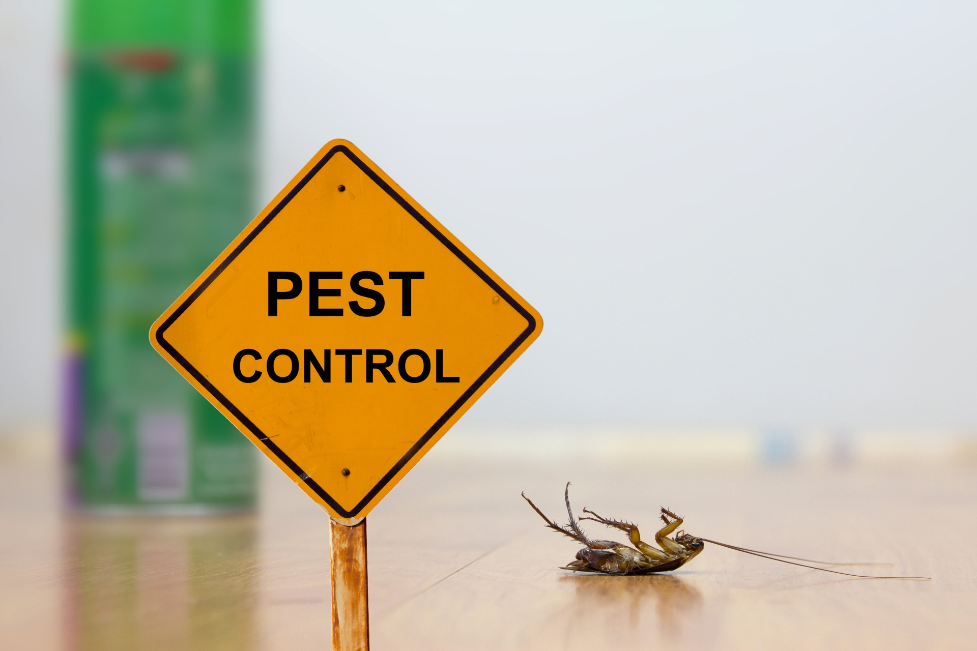 24 Hour Pest Control, Pest Control in Chiswick, W4. Call Now 020 8166 9746