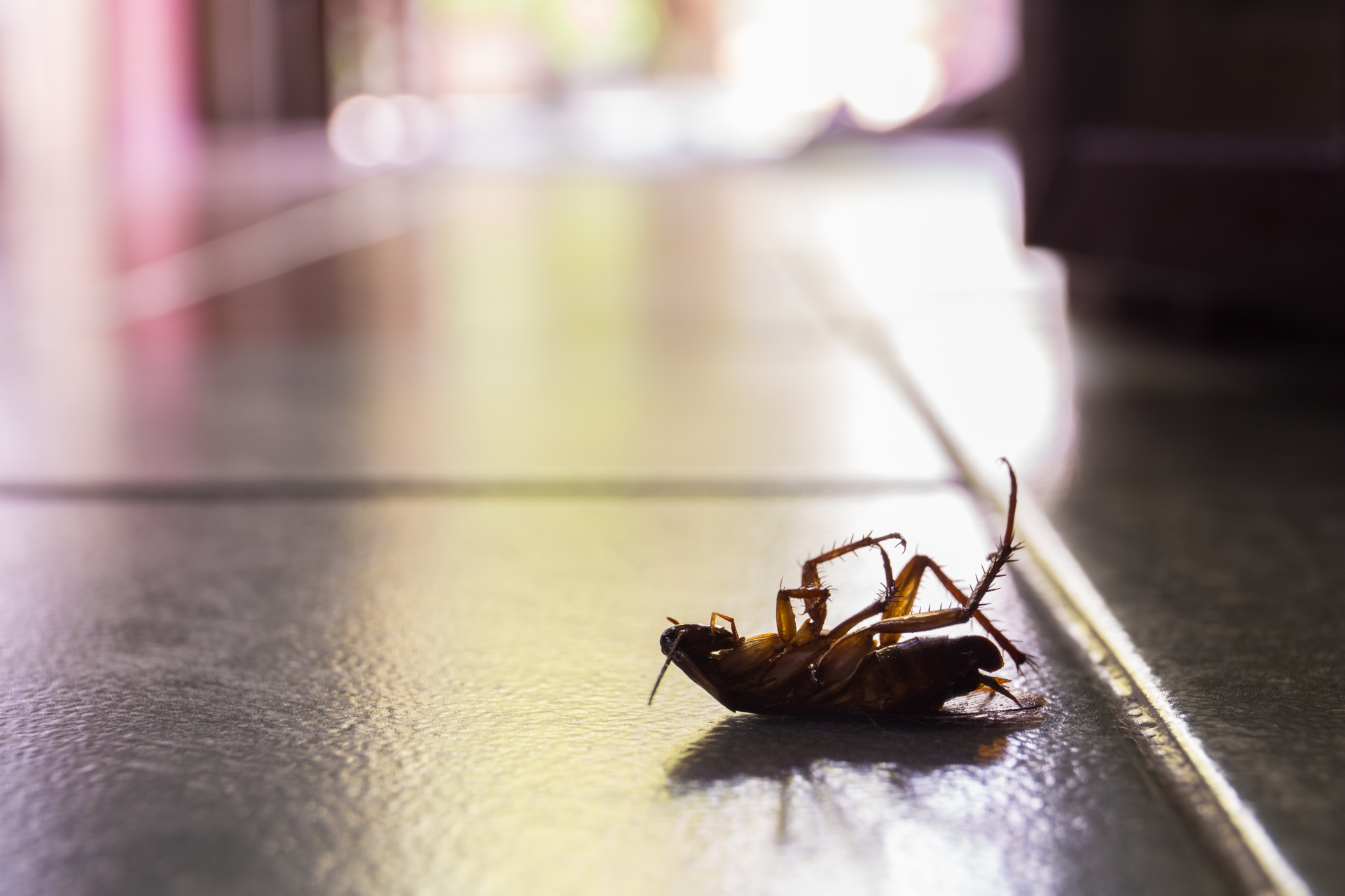 Cockroach Control, Pest Control in Chiswick, W4. Call Now 020 8166 9746